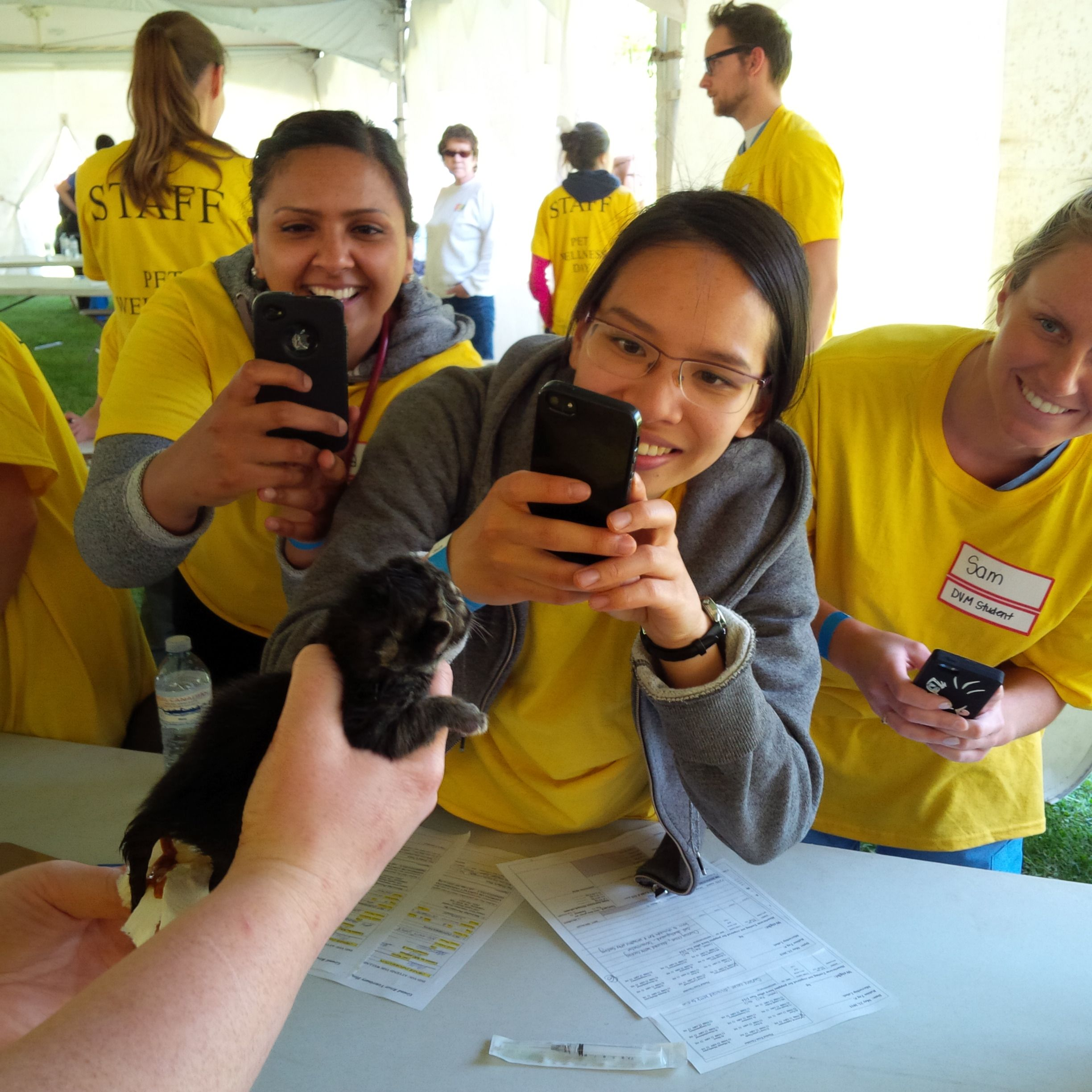 Vet students taking photos of a fourdayold kitten, the