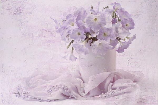 #petunia #purplepetunia  #petuniaflower #summerspleasure #petuniastilllife #petuniaart #texturedpetunias #texturedflowers #sandrafoster #sandrafosterfineartamerica  #sandrafosterpixels