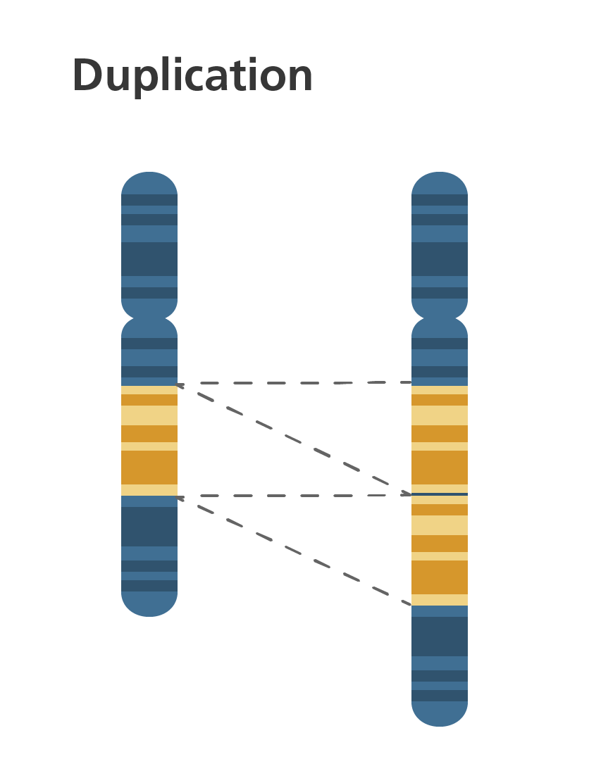 chromosome simple