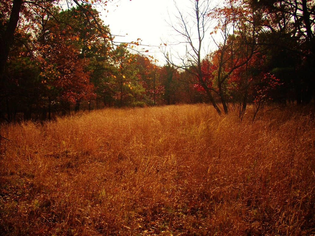 Pin On Me Myself And I Autumn grass field mountain forest trees