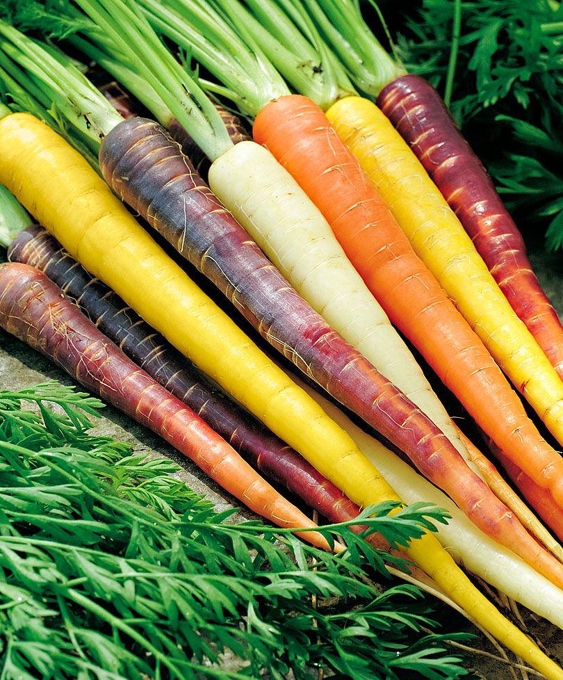 carote colorate Daucus carota, Carote, Cose buone
