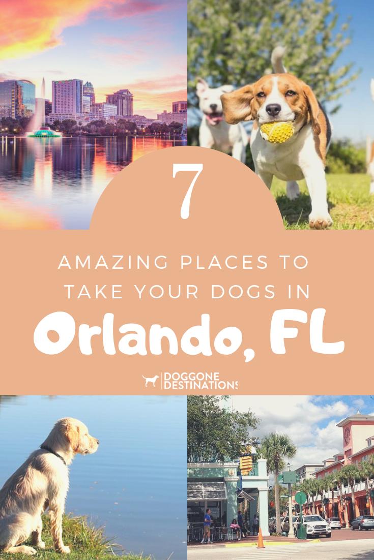 7 Amazing Places To Take Dogs In Orlando Fl Doggone Destinations Pet Friendly Resort Dog Friendly Orlando Pet Travel