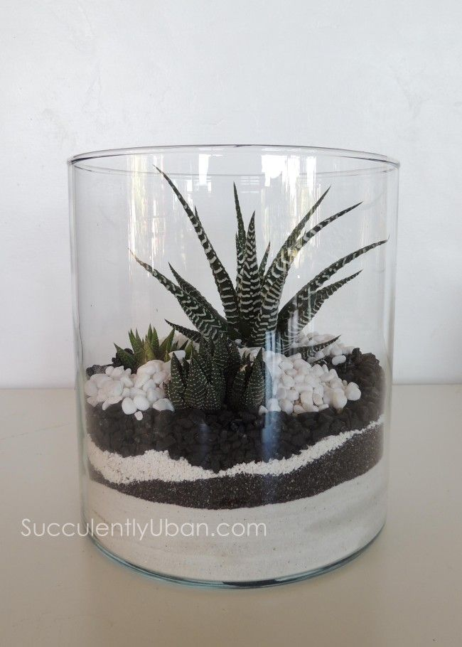 Cylinder Succulent Terrarium San Diego Delivery Only Succulents