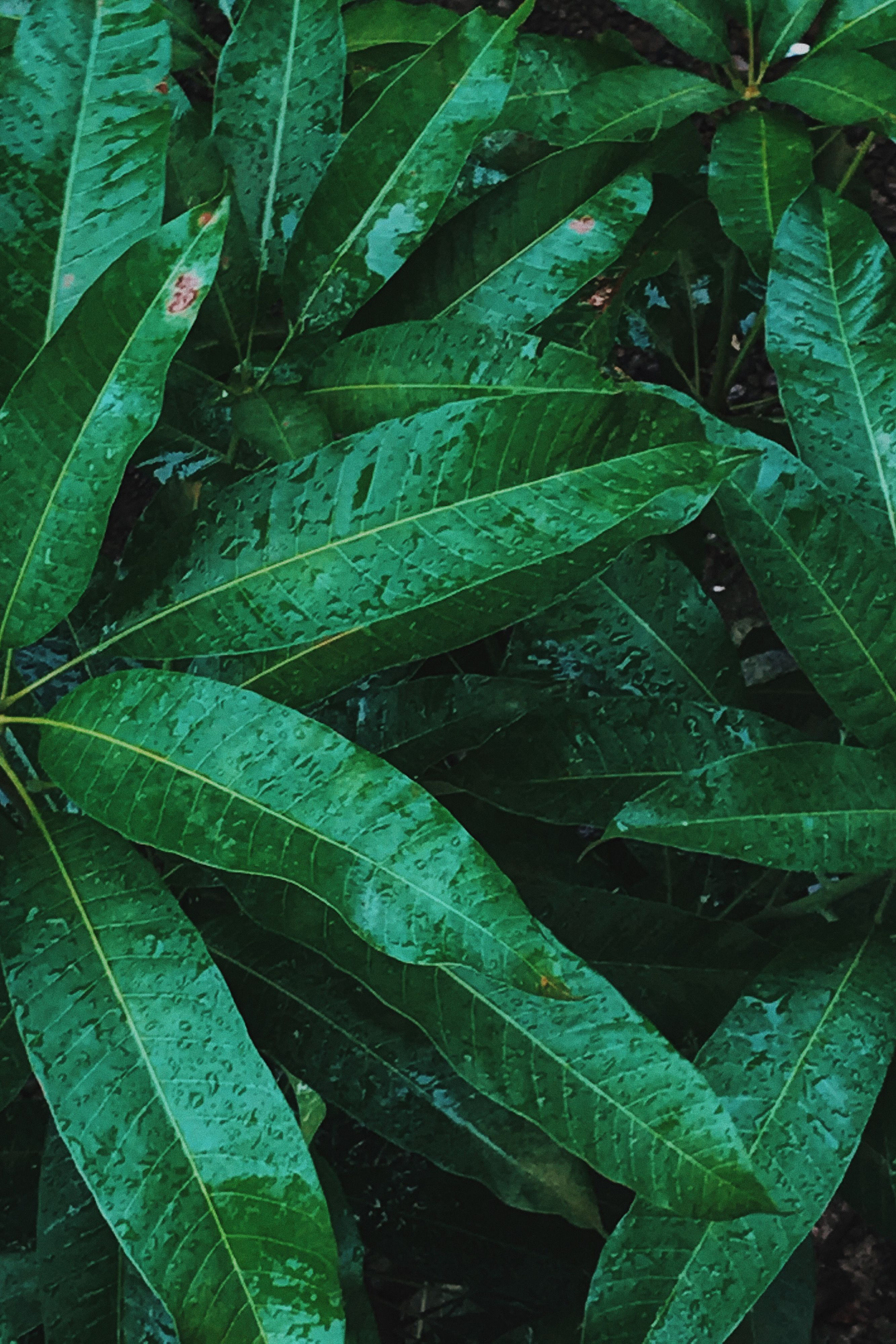 Homescreen Wallpaper Leaf Daun