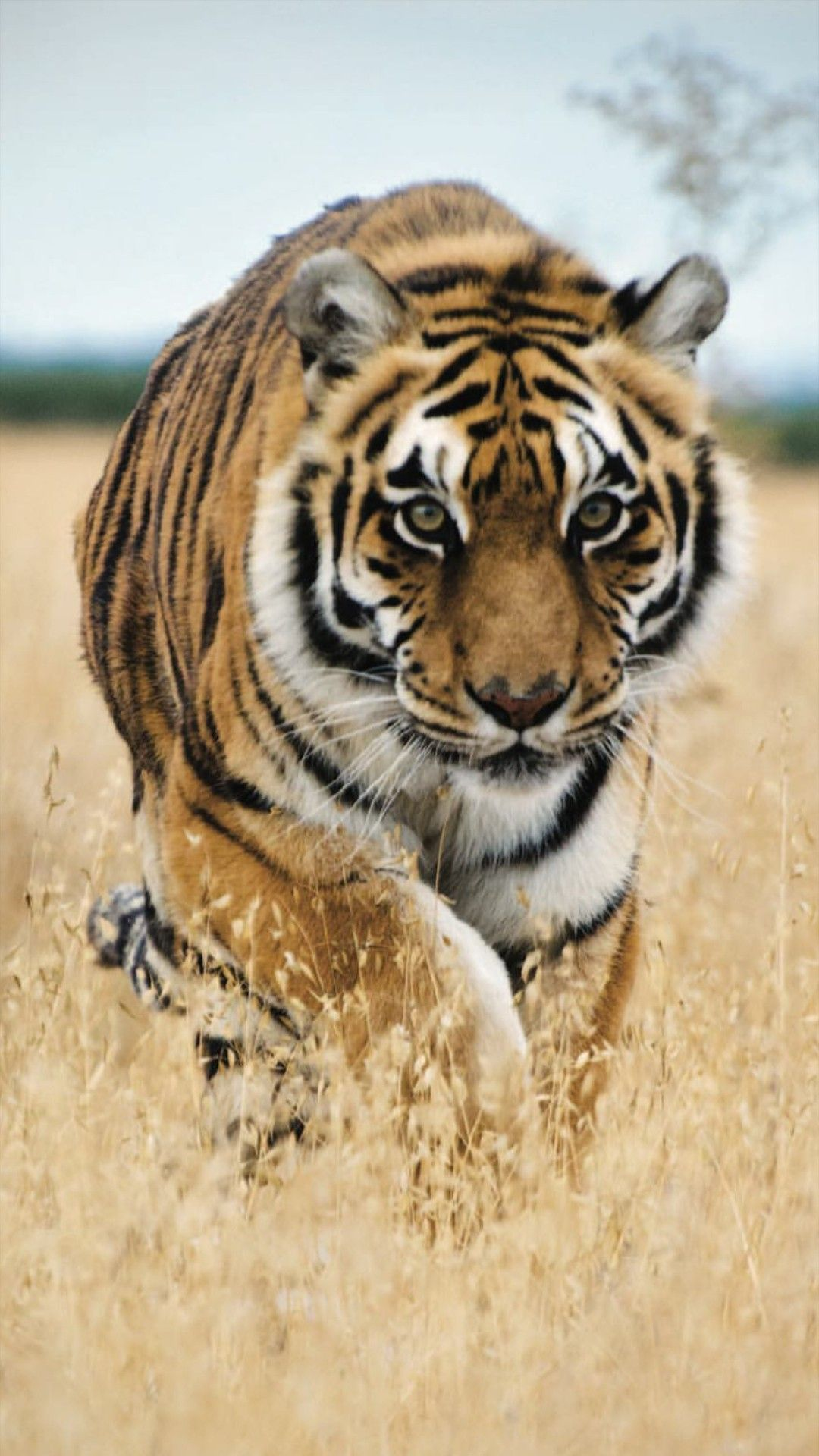 Pin On Animal S Exotic