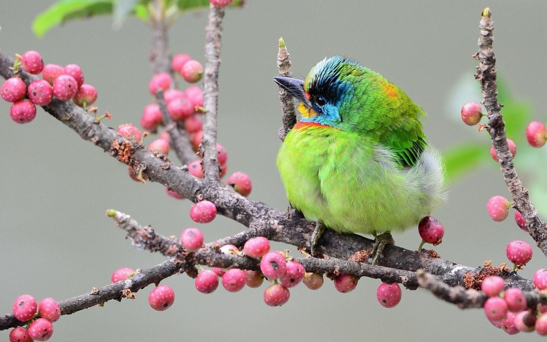 Bright Bird Beautiful Bird Wallpaper Birds Wallpaper Hd Beautiful Birds