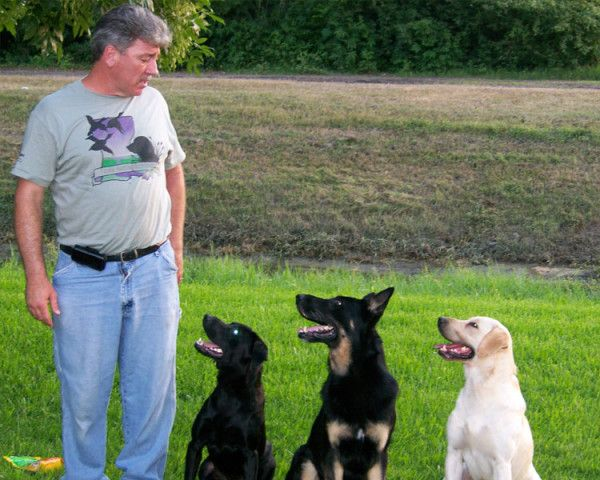 Pin By Coco German Shepherd On Dog Trainers Dog Training Dogs