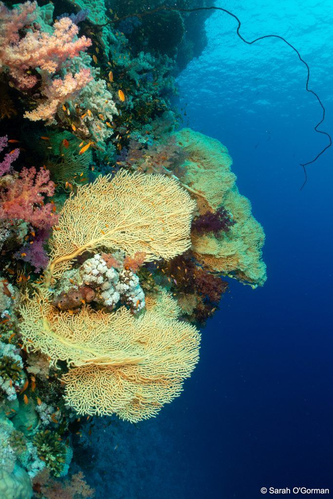 Top 10 Dive Sites In Egypt