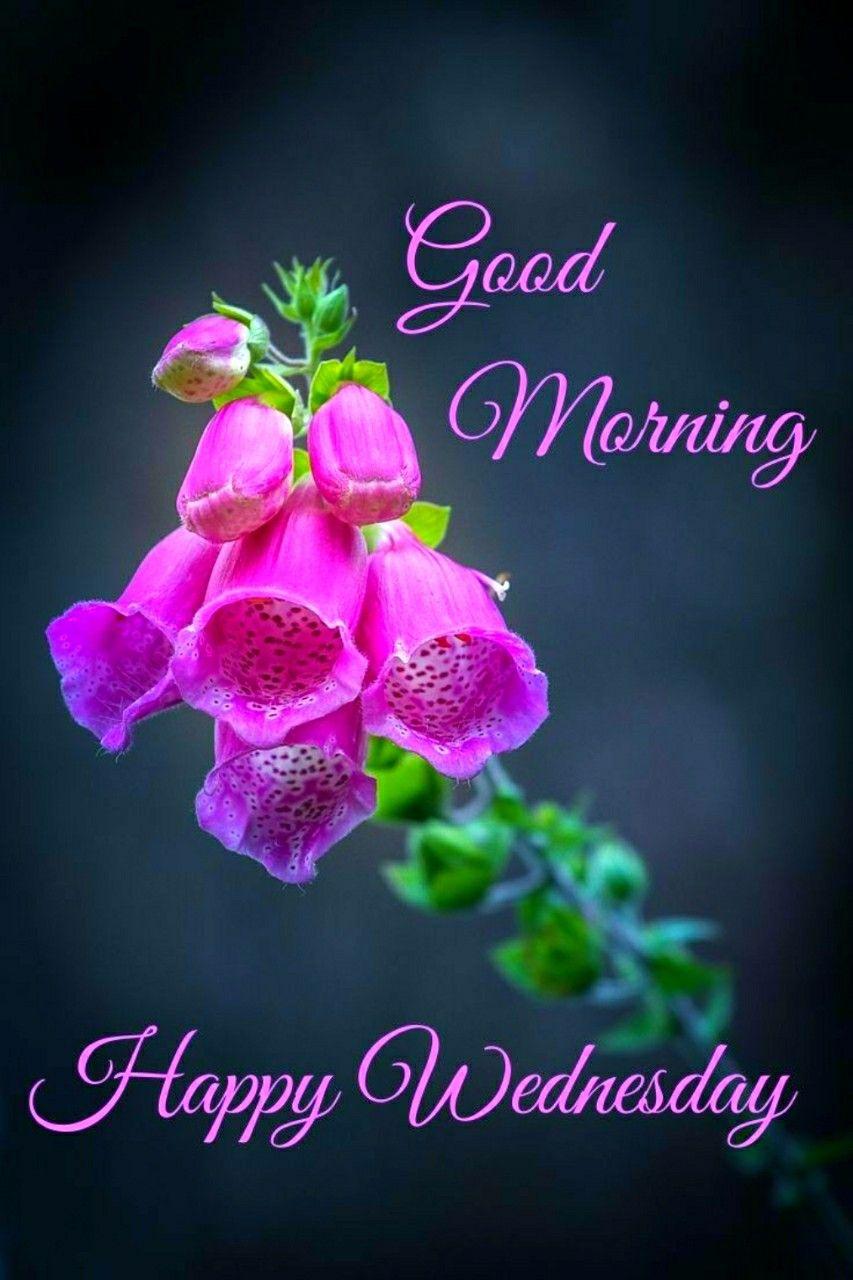 Happy Wednesday Saved By Sriram Good Morning Wednesday Good Morning Flowers Wednesday Morning Greetings