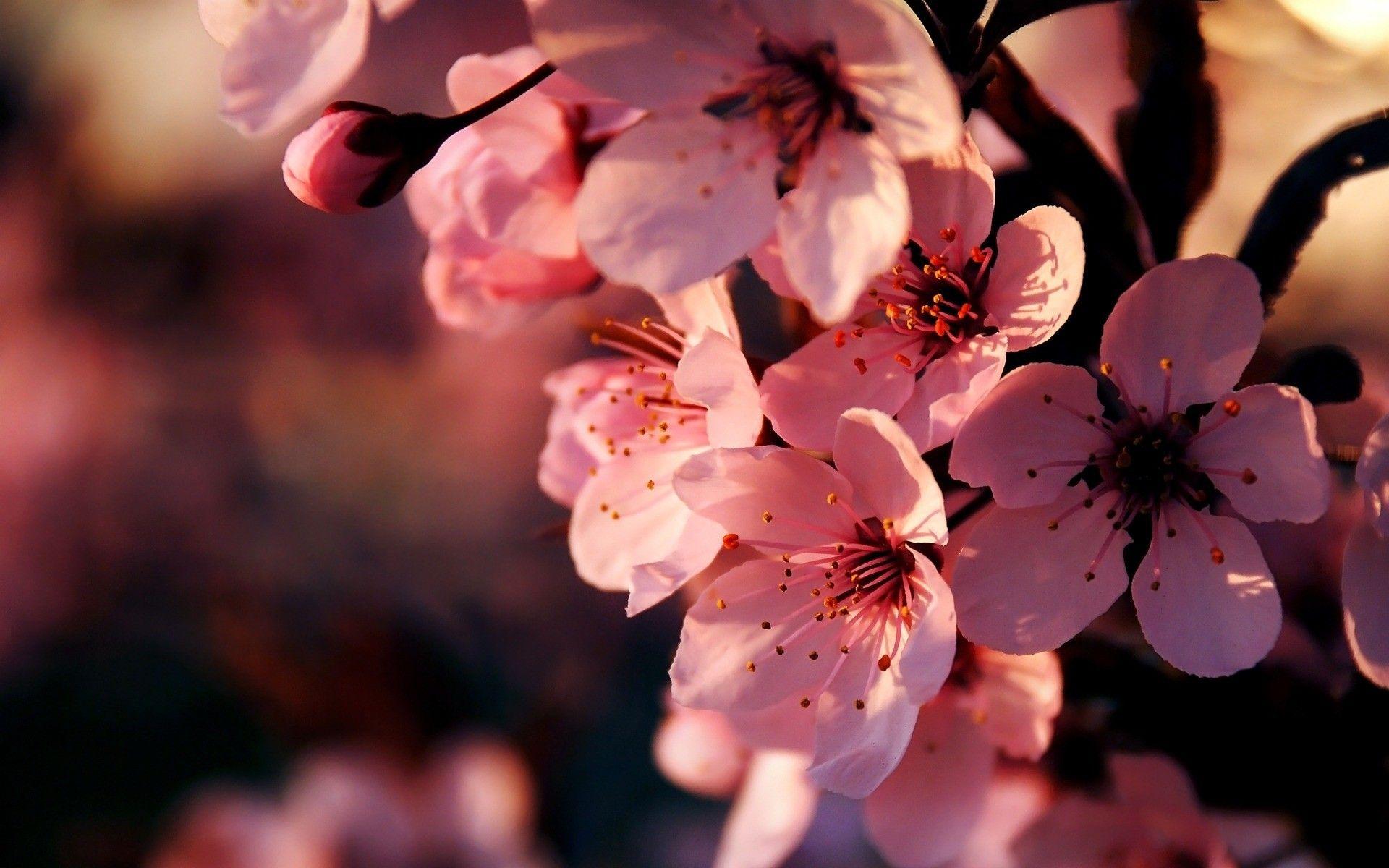 Pink Flower Wallpaper Hd 1