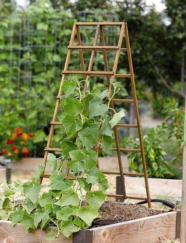 Bildergebnis Fur Gurken Garten Hochbeet Vertikaler Garten Und Garten