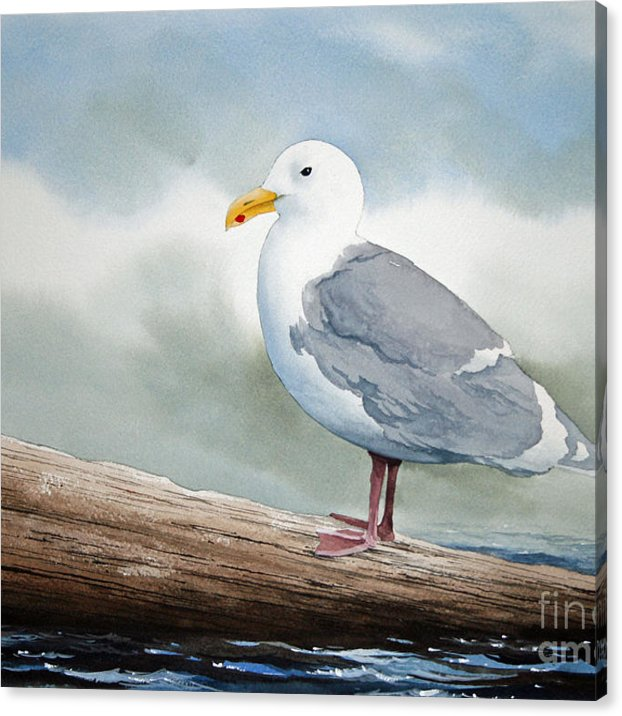 Seagull Canvas Print Canvas Art By James Williamson In 2020 Watercolor Bird Birds Painting Art