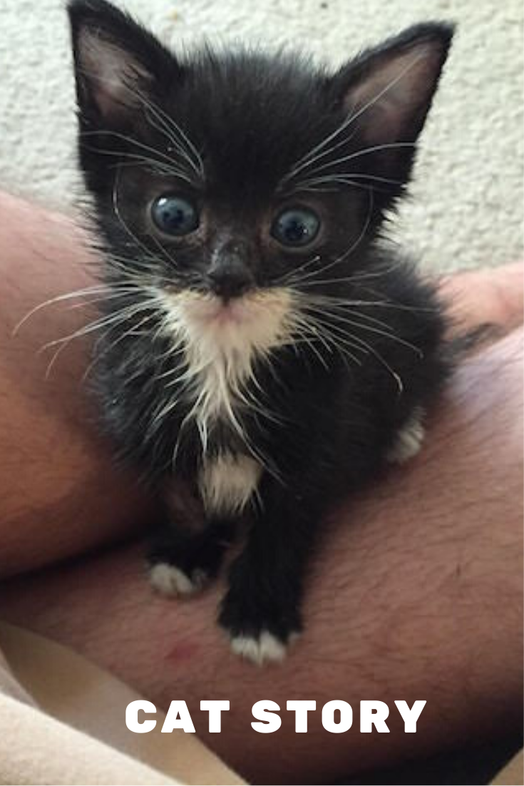 Woman Spends Entire Paycheck To Rescue A Hopeless Stray Kitten In 2020 Kitten Dog Cat Beautiful Creatures