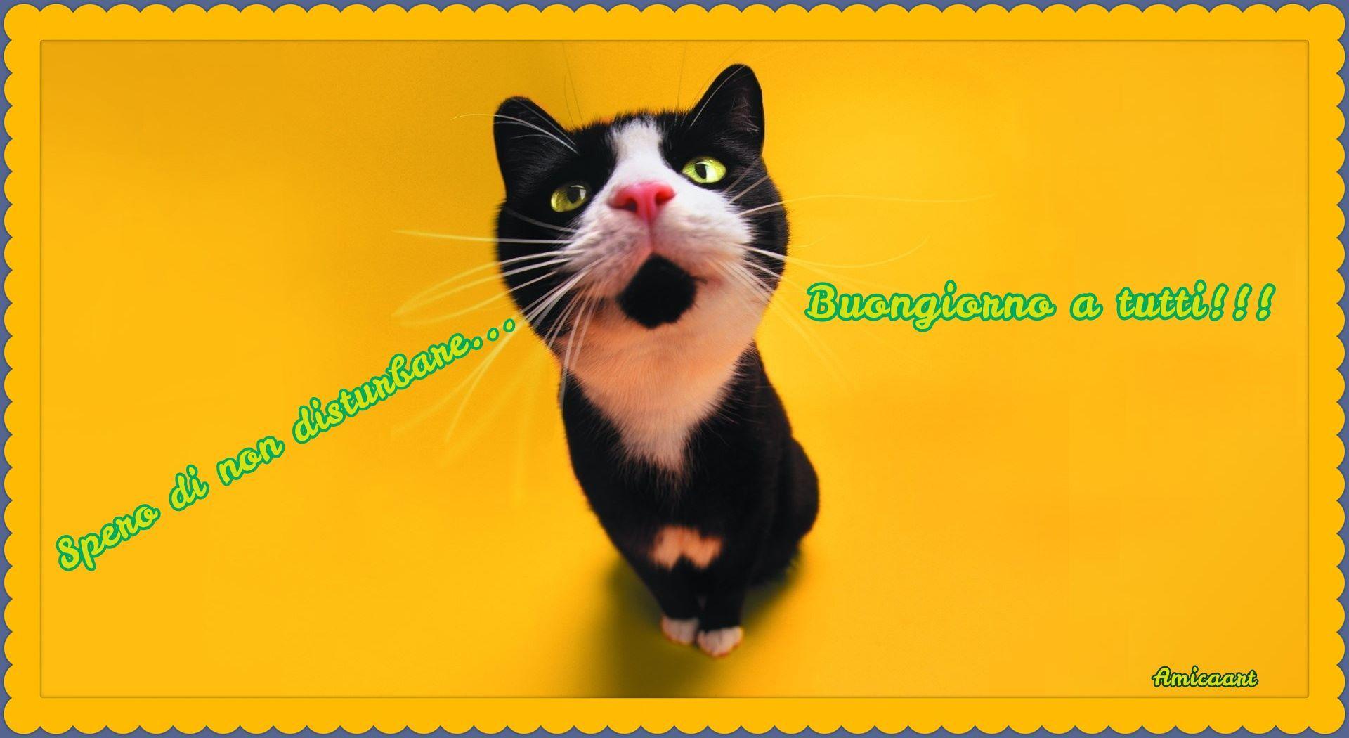 Buongiorno scarica immagine o condividi images and gif for Buongiorno con gattini