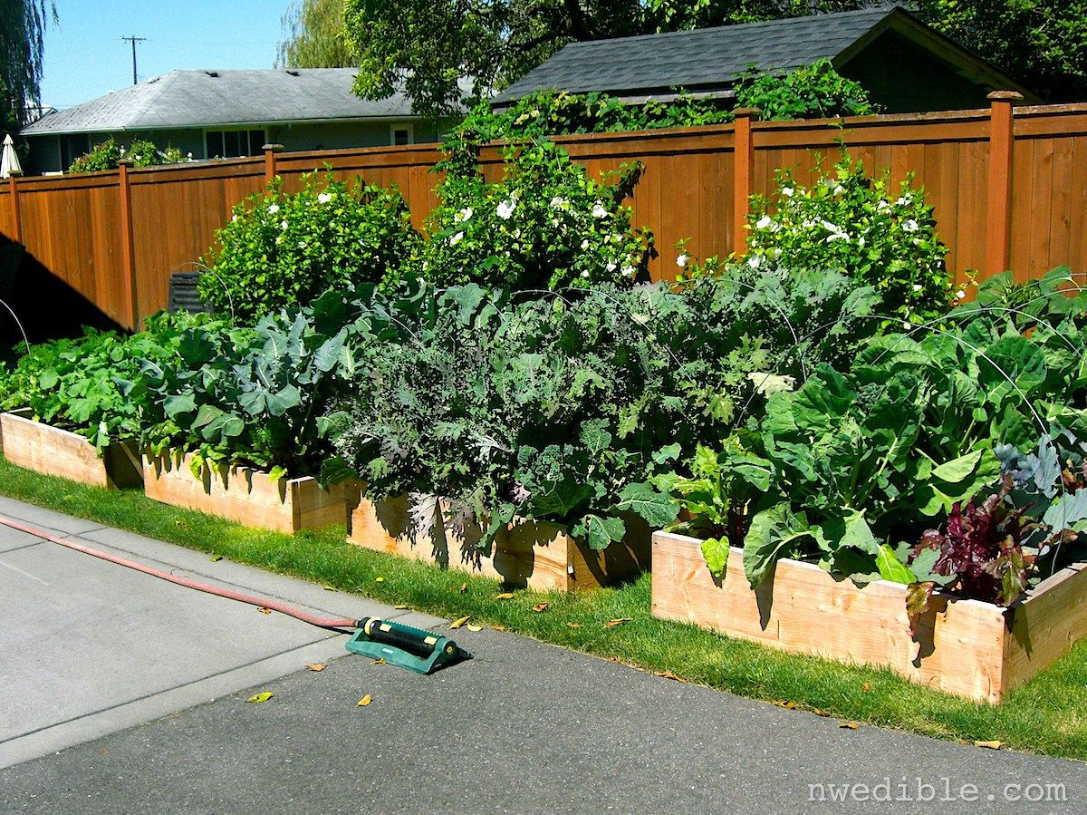 Lovely Creating Organic Garden Can Be Very Easy Even If You Donu0027t Have Large Space  For Gardening. Fertilizing Vegetable Gardening In A Raised Bed To Find  Great ...