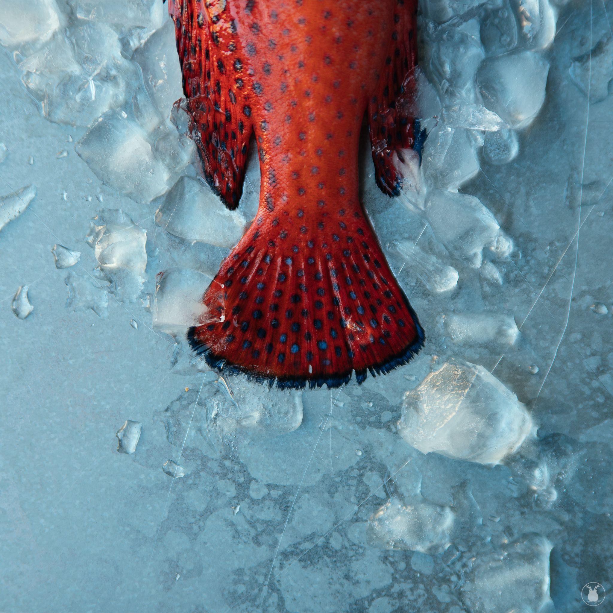 Red fish, blue dots. Fish, fresh, red, food photography. Sasha O ...
