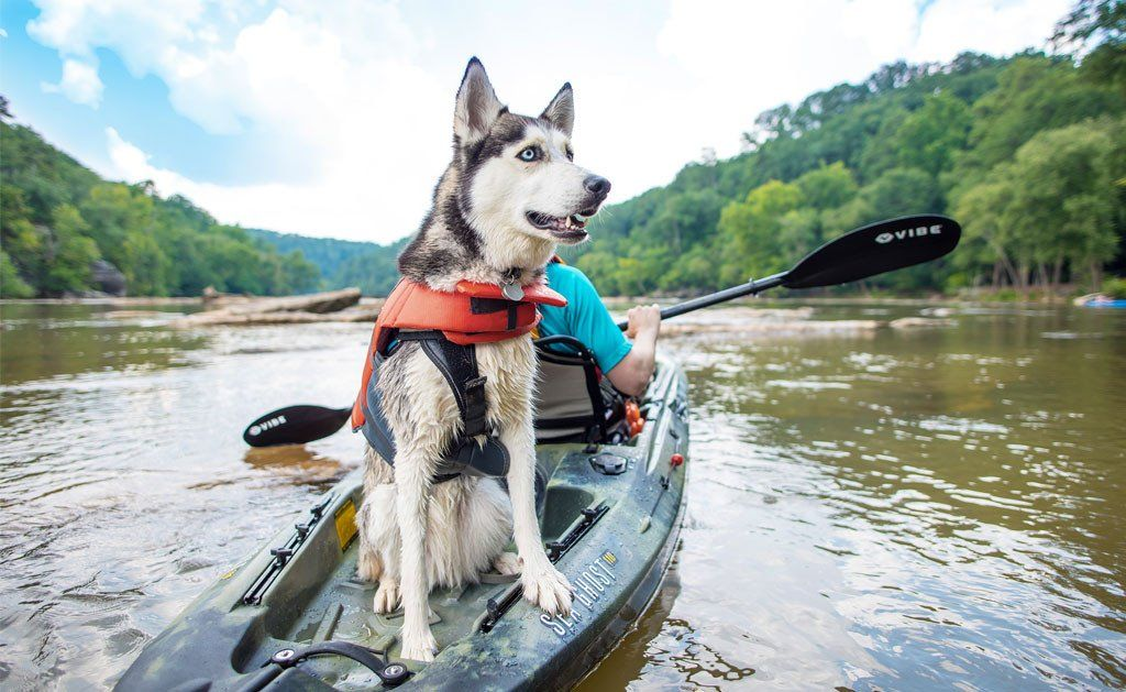 Tips For Kayak Adventures With Dogs Kayaking With Dogs Kayak