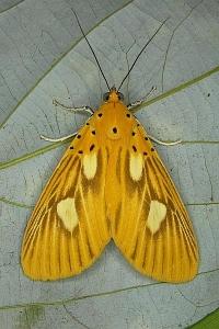 Butterfly Bilder Schmetterling Pflanzenwelt