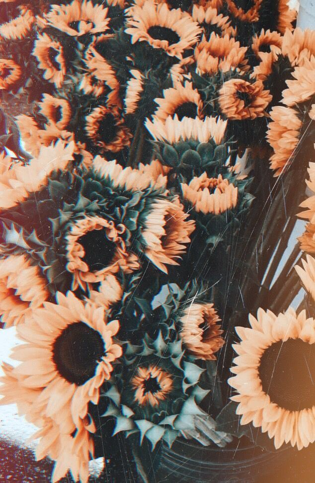 Wallpaper Backgrounds Aesthetic flowers vintage