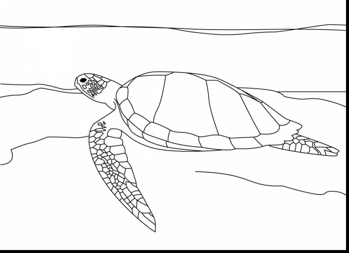 remarkable sea turtle drawing with sea turtle coloring page ...