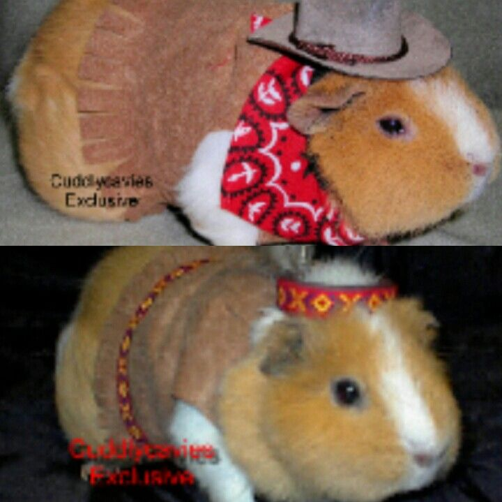 Pin On Guinea Pig Clothes