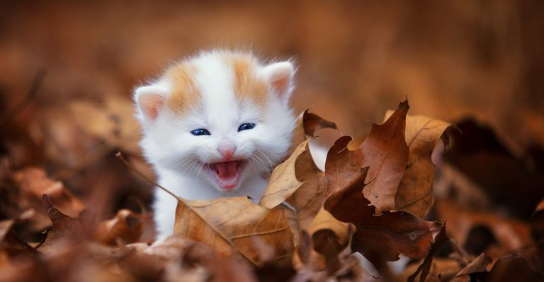Kitten Development Cat behavior, Cat toys, Newborn kittens