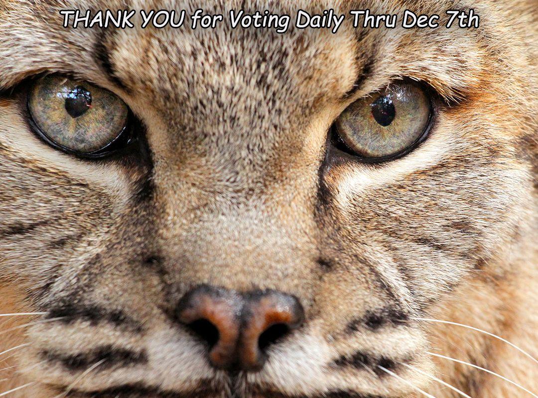 WEDU, West Coast Florida's Public Media Company Big cat