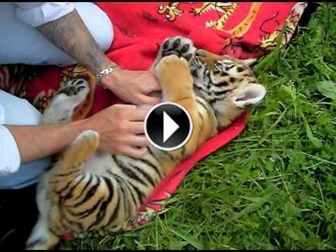 Pingl par sur animaux sauvages pinterest - Jeux d animaux trop mignon ...