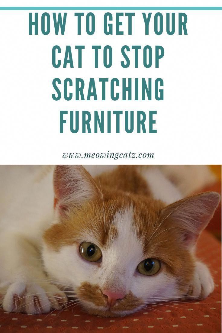 Do You Want To Know How You To Keep Your Cats From Scratching And Destroying Your Furniture Then Check O Cat Training Cat Training Scratching Raising Kittens
