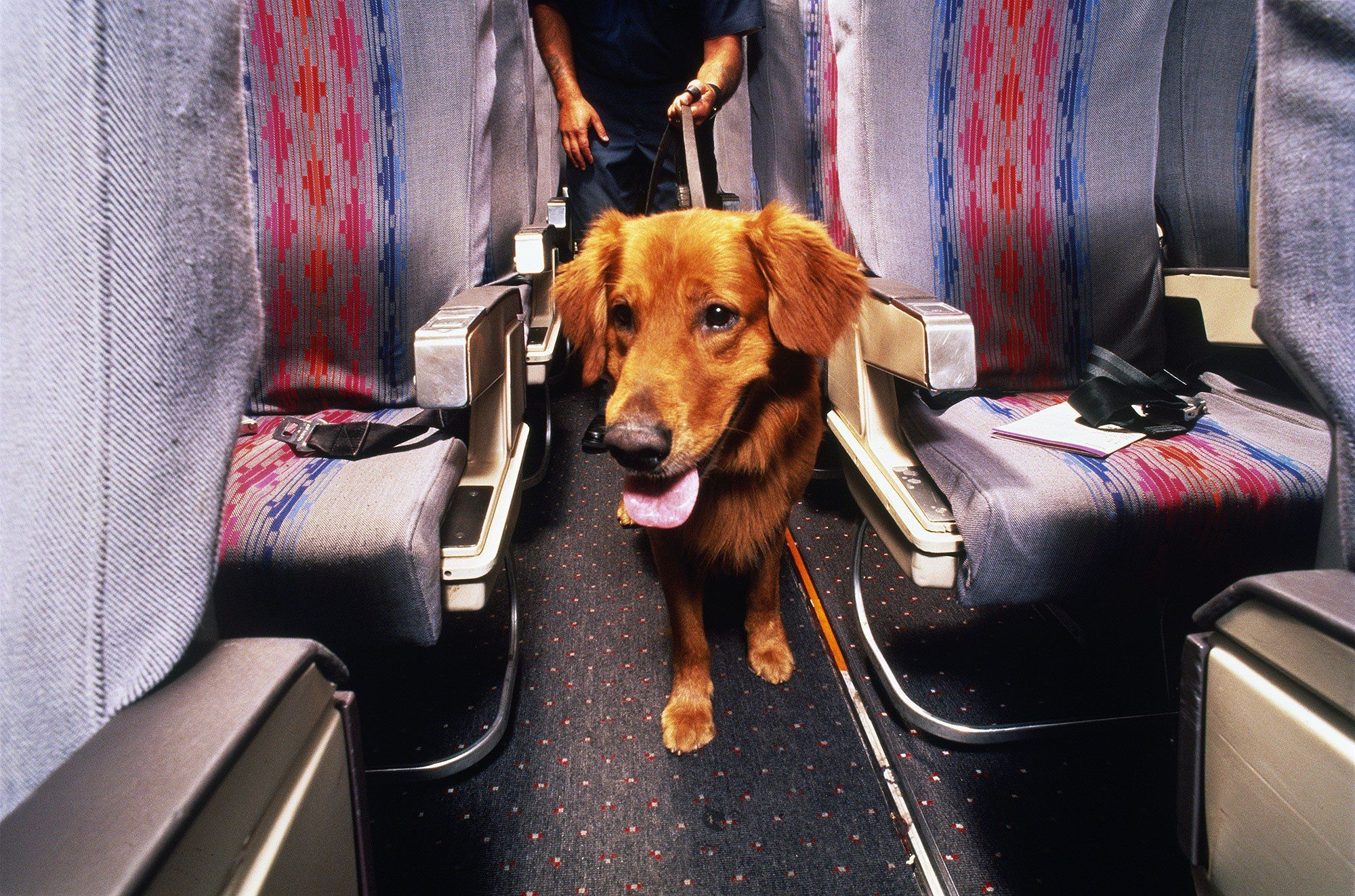 Avoid Dog Travel Drama, Here's How to Prepare Your Pet for