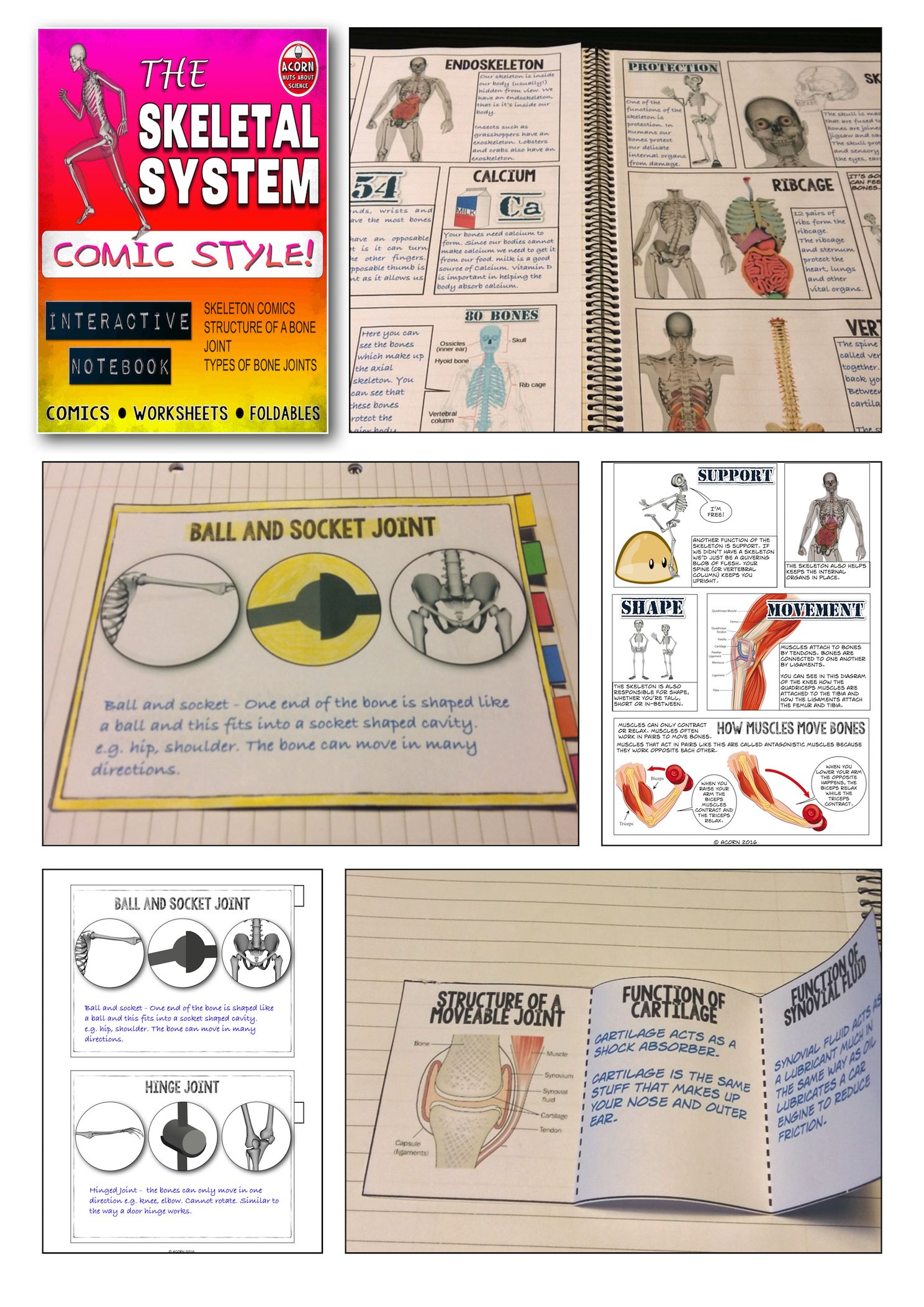 Skeletal System Interactive Notebook Pinterest Interactive