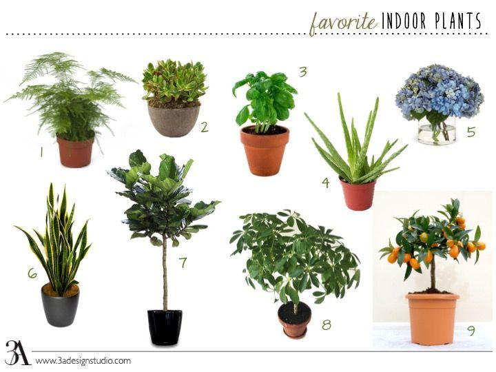 Favorite Indoor Plants 3a Design Studio Common House Plants