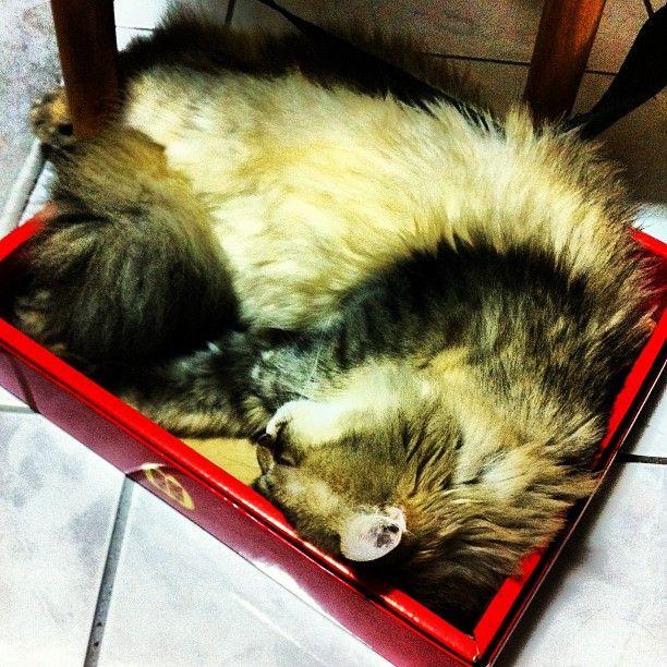 享受盒子的貓