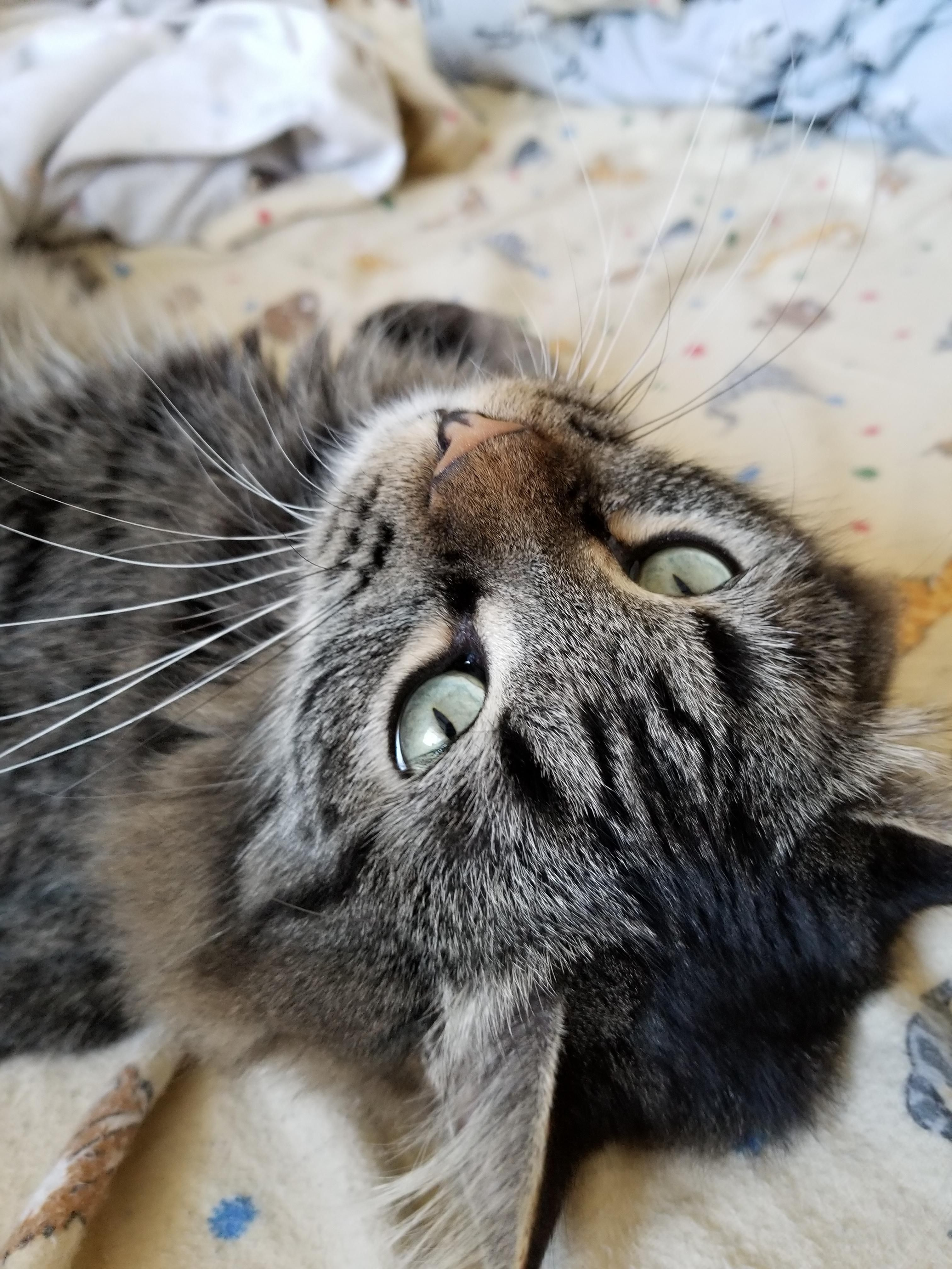 Pin On All About Cats And Kittens Cat Care Tips
