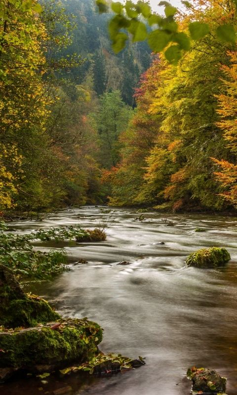 480x800 Wallpaper Harz Germany Autumn River Trees