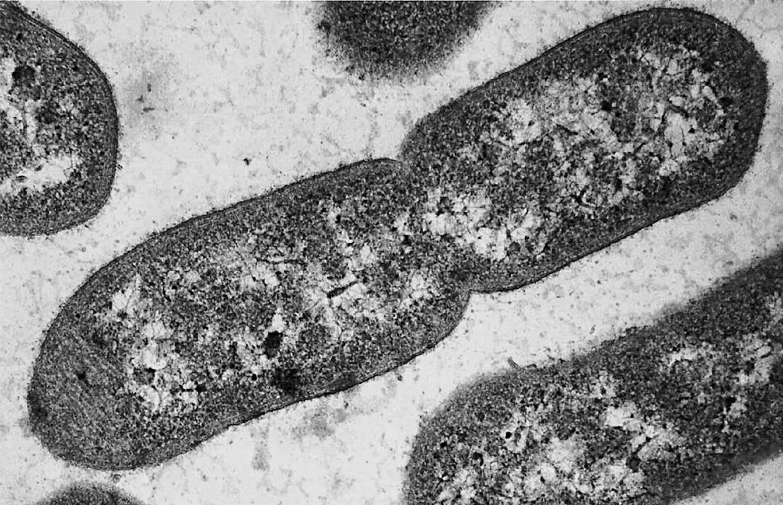 Cristian Hernandez Hernandezc2017 On Pinterest Diagram Of Prokaryotic Cell By Mariana Ruiz
