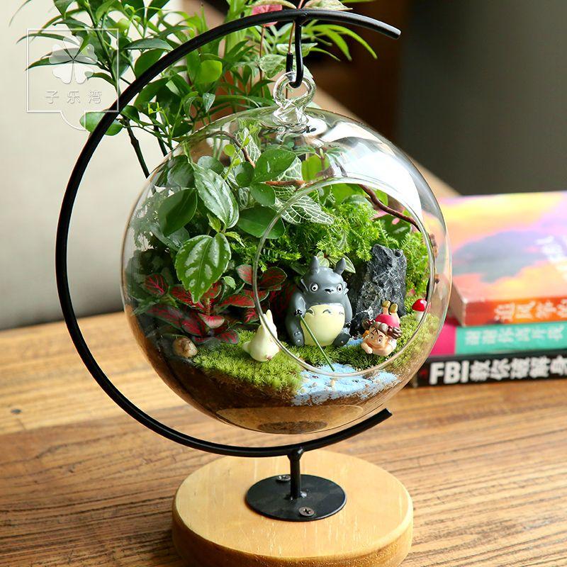 G nstige topfpflanzen innerhalb moosgr n flasche micro for Kleine mucken in topfpflanzen