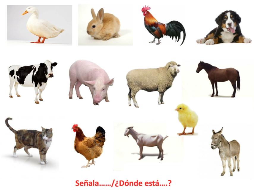 PRUEBA LÉXICO - SEMÁNTICA Los animales domesticos video | animales ...