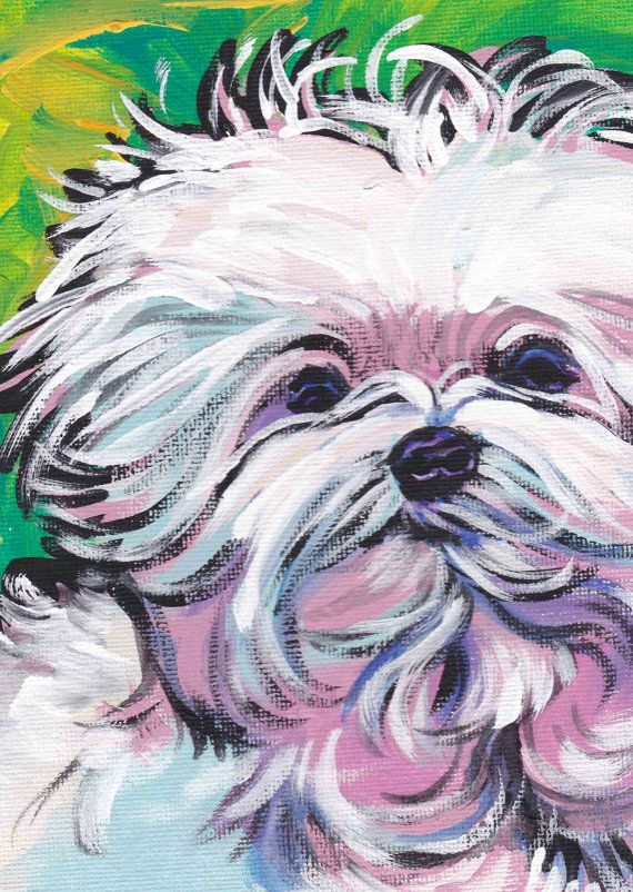 Maltese Art Print Pop Dog Art Bright Colors 13x19 By Bentnotbroken