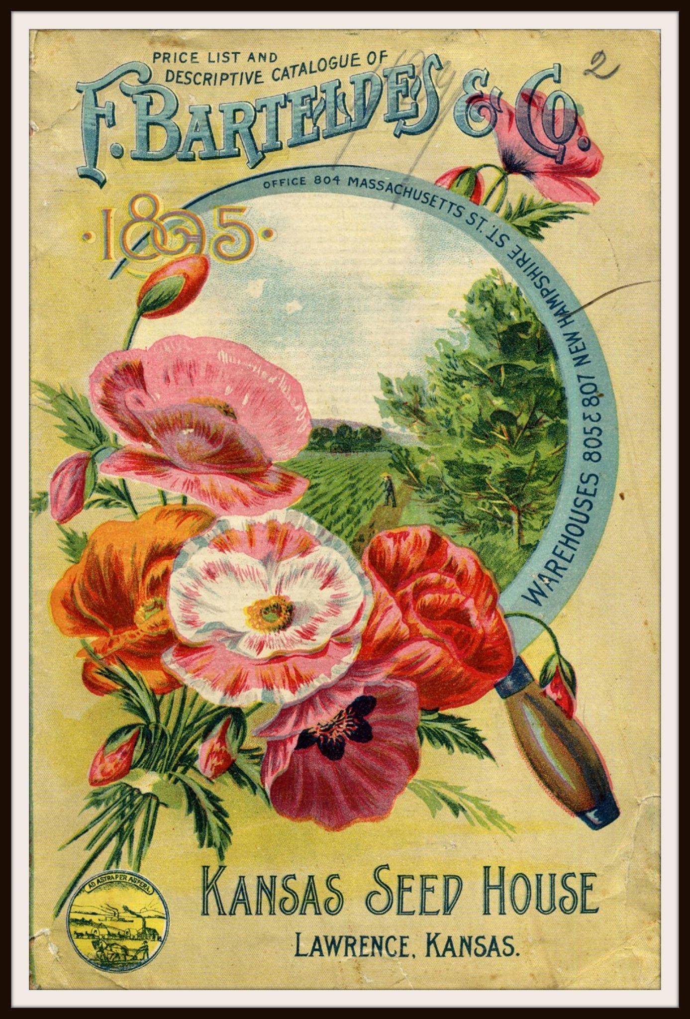 Vintage Reproduction Seed Pack Cover Art Print | Vintage | Pinterest ...