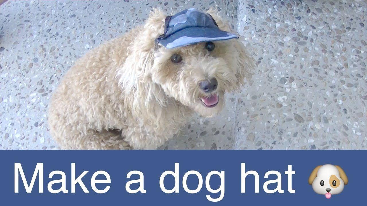 Dog Accessories Gold Coast Dog Accessories Limerick Dog Accessories Dog Sweaters Dog Coats