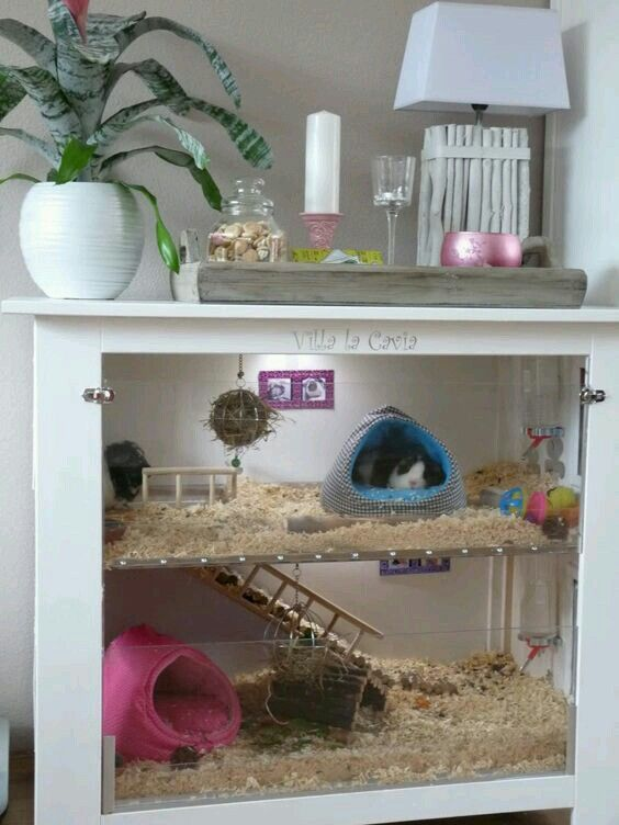 pin by on hamster cages pour cochon d. Black Bedroom Furniture Sets. Home Design Ideas