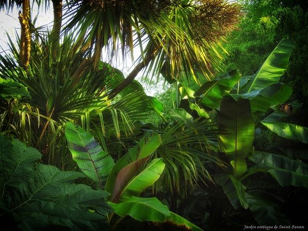 Jardin Exotique De Saint Renan Neophytes Ou Amateurs Eclaires