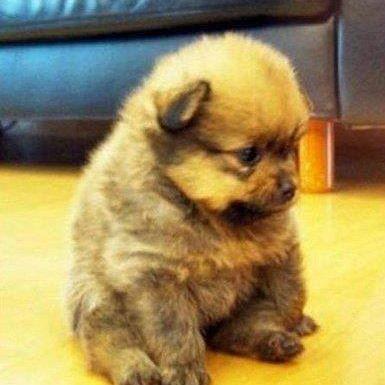 Soooo cute!!! (: