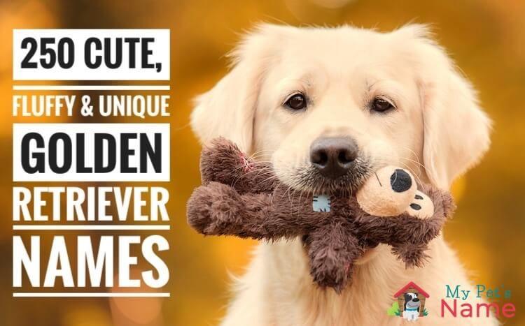 101 Best Golden Retriever Names Cute Fluffy Unique Names My Pet S Name Golden Retriever Names Golden Retriever Retriever