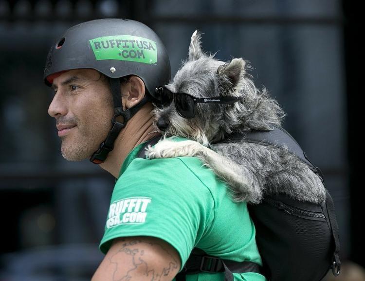 Ruffit Dog Carrier Uk