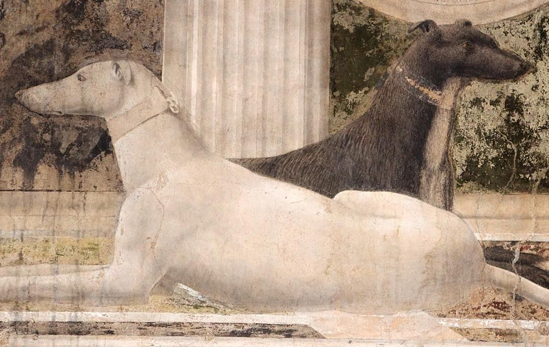 BALANCE #pierodellafrancesca #dog #piero #dogsofinstagram #masterpiece #renaissance #painting #artofinstagram by kentansg