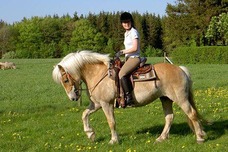Svensk rideferie