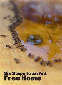 Pin By The National Pest Management A On Ants Get Rid Of Ants Rid Of Ants Ants