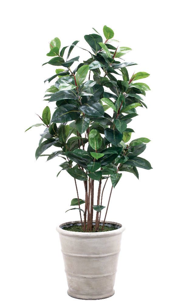 Rubber Tree In Shown In Container D, Triple Rib Planter Oyster Grey   NDI |
